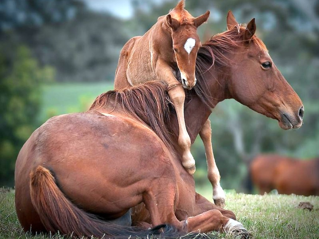 Baby-Horse-Picture