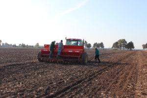 сеитба на пшеница