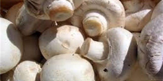 печурки, гъби