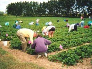 земеделски работници