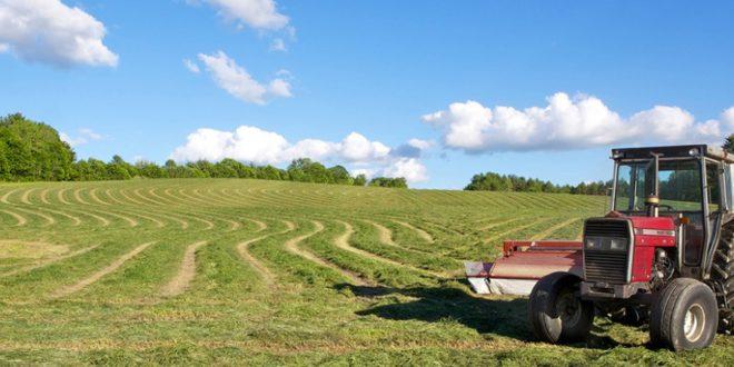 ферма, земя