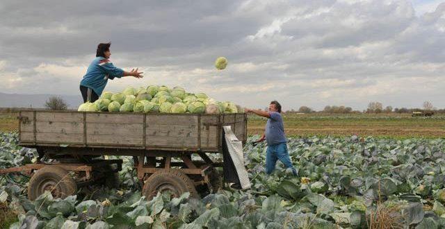 земеделски стопанства