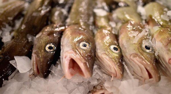 fishing-stocks