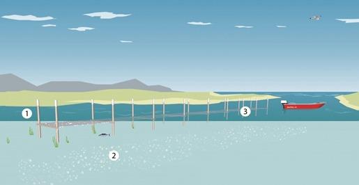 open-aquaculture-passive-1024x608